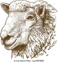 Drawn lamb lamb head