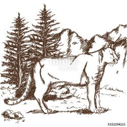 Drawn cougar wildlife