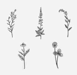 Drawn wildflower simple