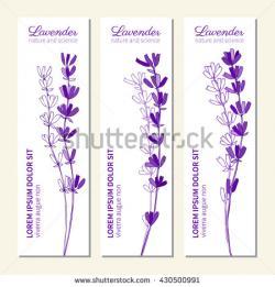 Drawn lavender doodle