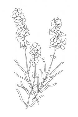 Drawn lavender embroidered