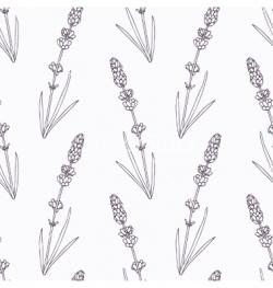 Drawn lavender hand drawn