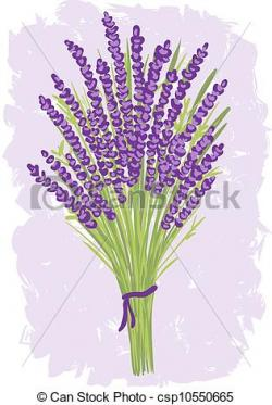 Drawn lavender lavender bunch