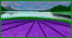 Drawn lavender lavender field