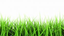 Drawn lawn green grass