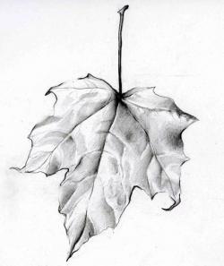 Drawn foliage pencil shading
