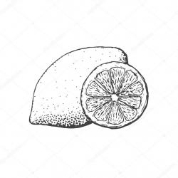 Drawn lemon illustration