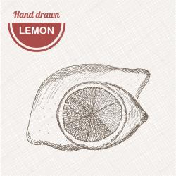 Drawn lemon vintage