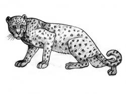 Drawn leopard