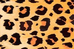 Drawn leopard skin