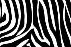 Drawn leopard skin drawing