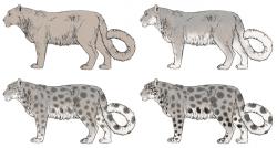 Drawn snow leopard puma