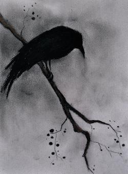 Drawn raven black raven