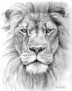 Drawn lion