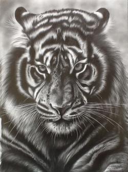 Drawn tigres tigger