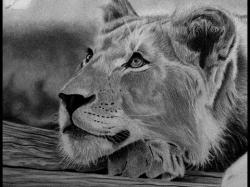 Drawn fur Drawing Lion Fur