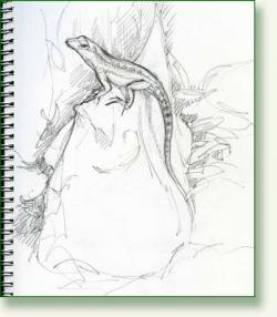 Drawn lizard