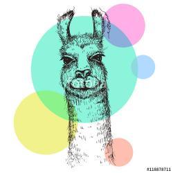Drawn alpaca lama