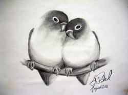 Drawn lovebird pencil art