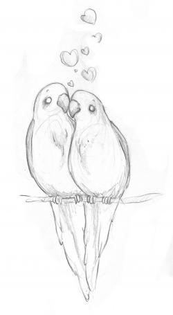 Drawn lovebird easy