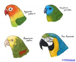 Drawn parrot anime