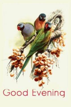 Drawn lovebird friendship day