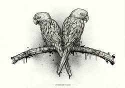 Drawn lovebird illustration