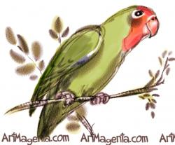 Drawn lovebird parrot