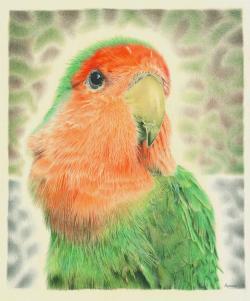 Drawn lovebird person
