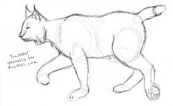 Drawn lynx