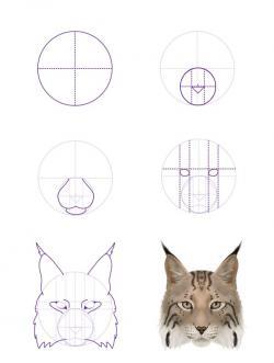 Drawn lynx lion