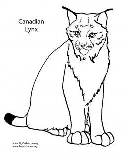 Drawn lynx simple