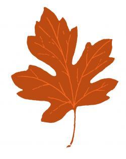 Single clipart fall leaves