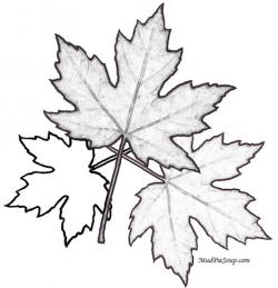 Drawn maple leaf