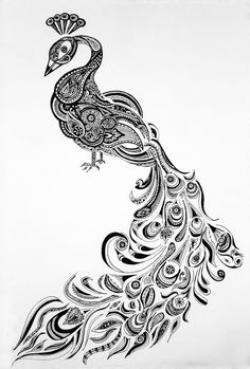 Drawn peafowl doodle
