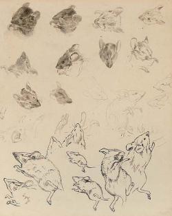 Drawn mouse beatrix potter