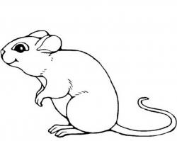 Drawn rodent mouse line