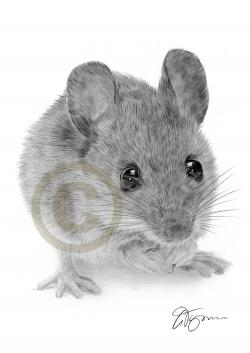 Drawn rodent pencil drawing
