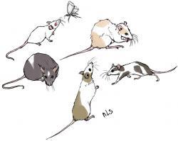 Drawn rodent deviantart