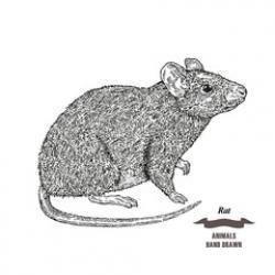 Drawn mice white background