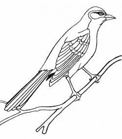 Drawn mockingbird colored