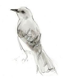 Drawn mockingbird mental health