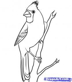 Drawn sparrow beginner