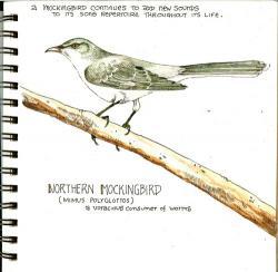 Drawn mockingbird southern