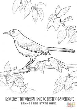 Drawn mockingbird tennessee state