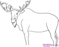 Drawn moose pencil drawing