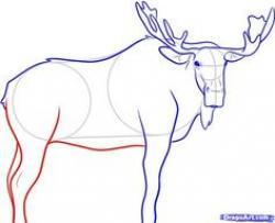 Drawn moose