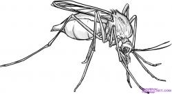 Drawn insect mosquito