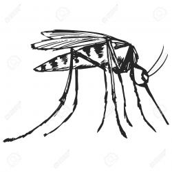 Drawn insect dengue mosquito
