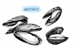 Drawn mussel